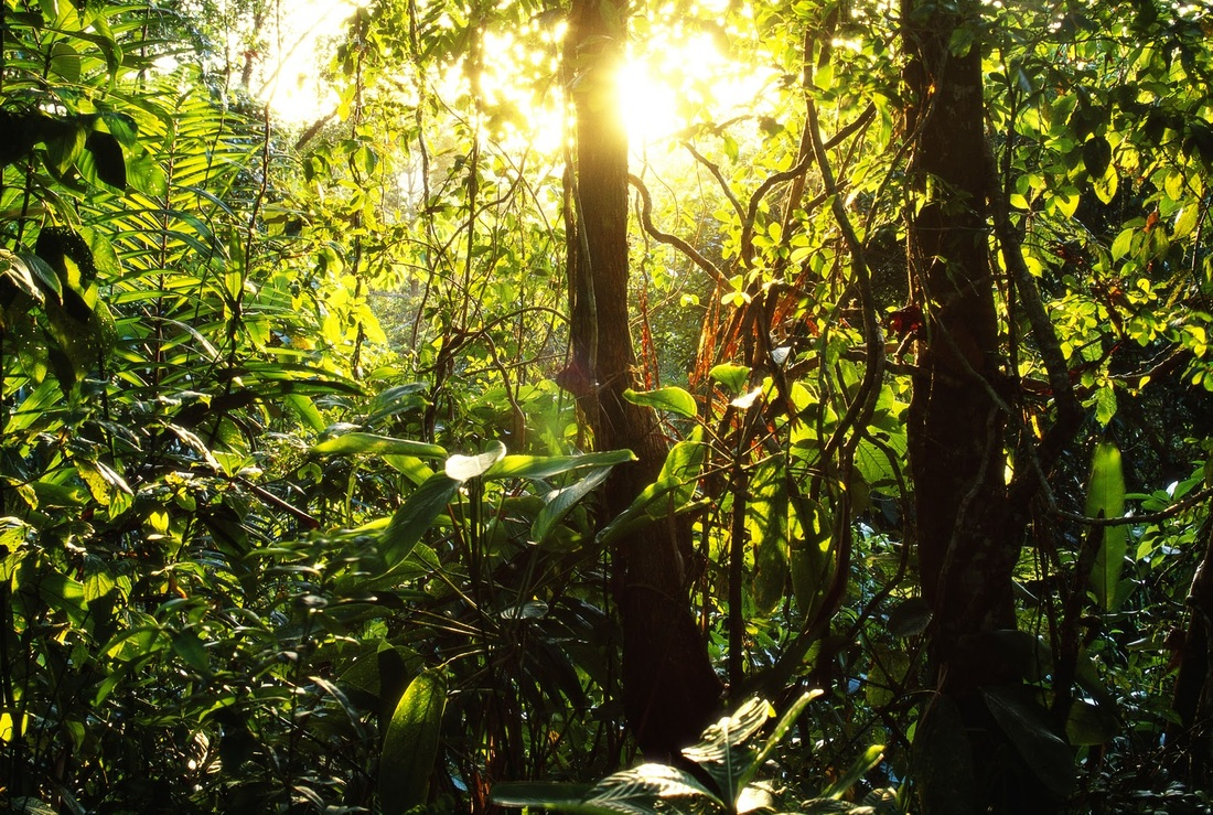 Abiotic Factors of Tropical RainforestsTropical Rainforest Sunlight